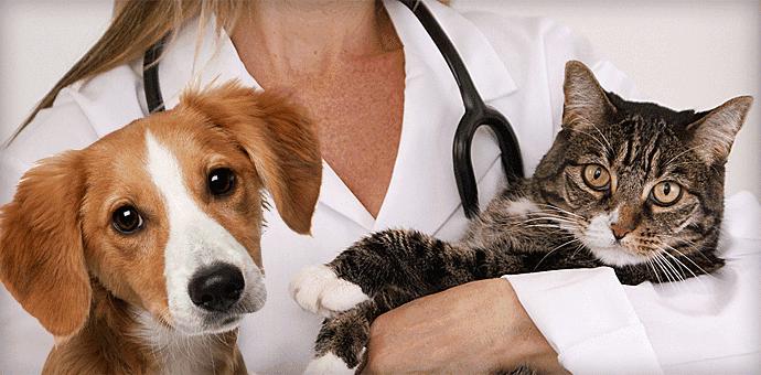 flea treatment for cats reviews
